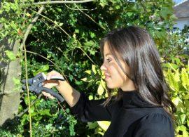 Recomandari pentru plantarea si ingrijirea arbustilor