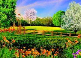 Utilizarea speciilor de plante si tipuri de amenajari