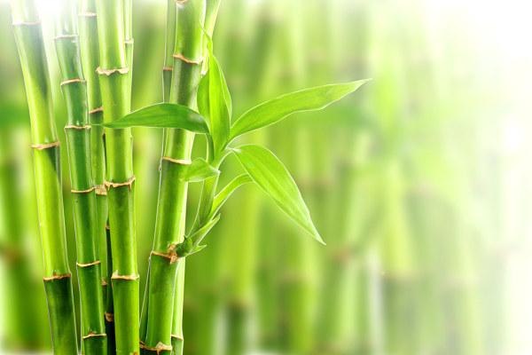 city relax bambus foltermethode