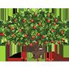 pomi-fruvtiferi