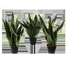 plante-mici-meniu