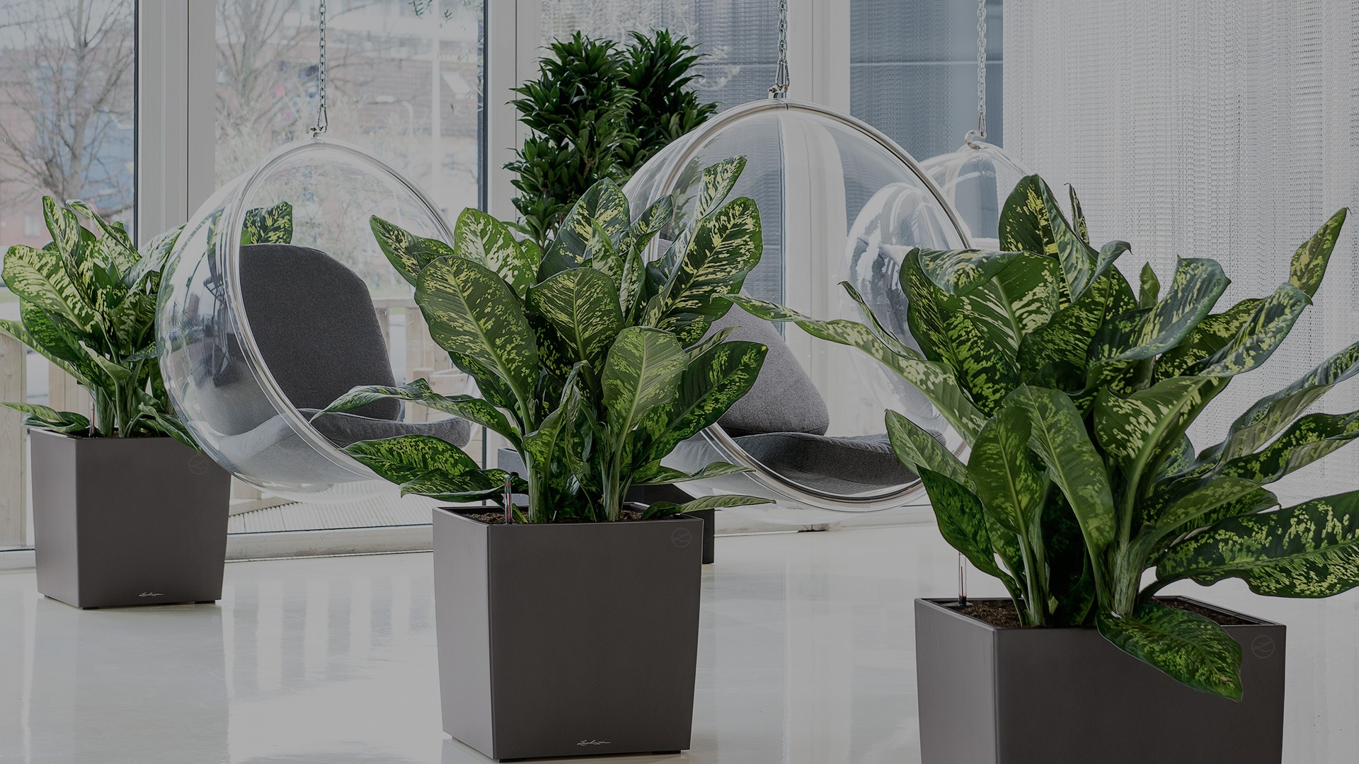 Plante de interior care aduc beneficii afl care plant for Plante de interior