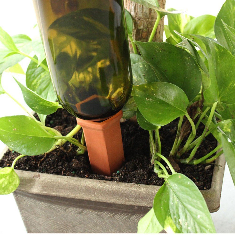 Udare plante ghiveci