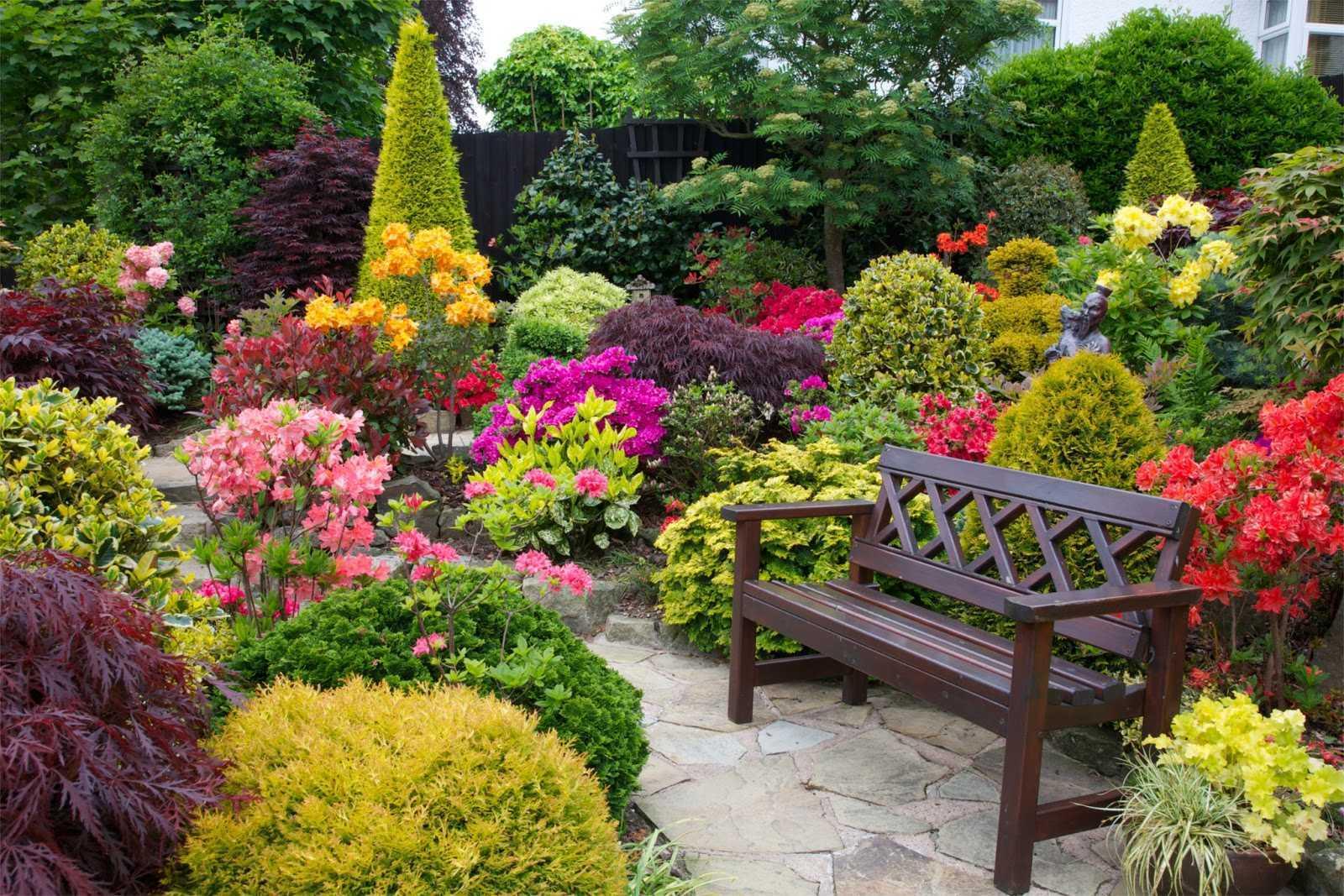 Arbuștii de grădină