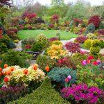 Grădina cu arbuști