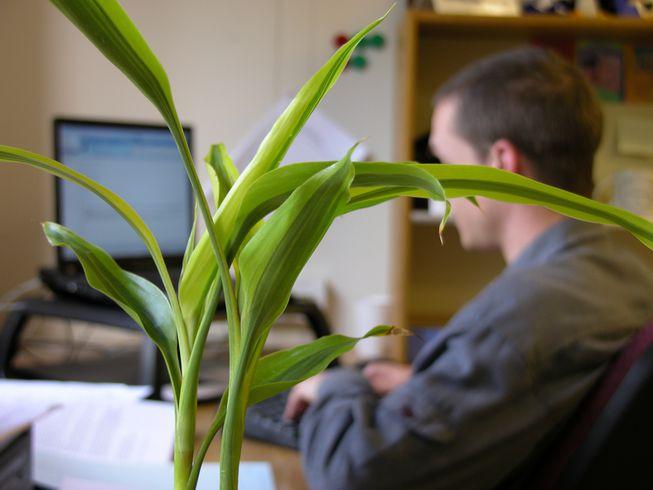 Beneficii plante de birou