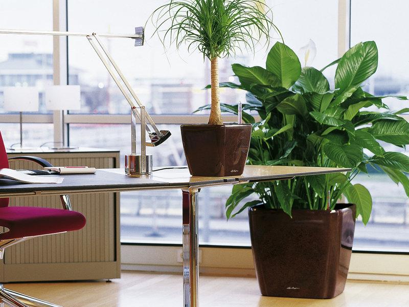 Ghivece Lechuza cu plante de birou