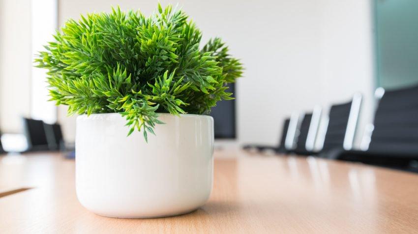Plante de birou mici