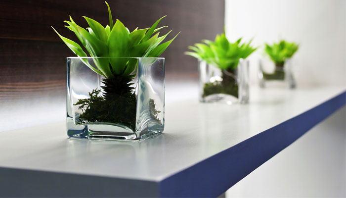 Plante de birou