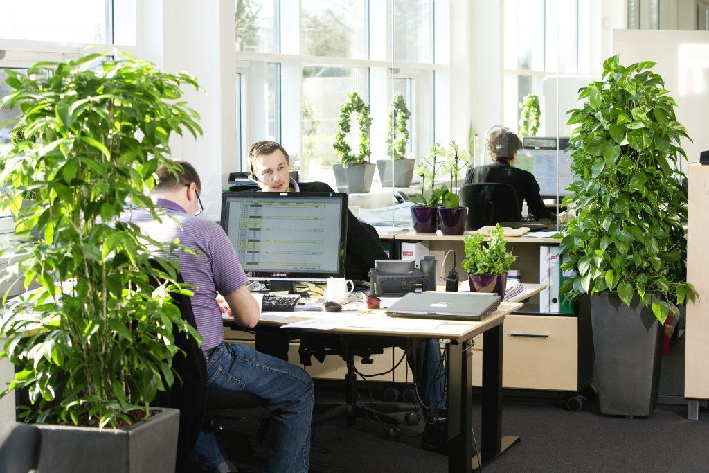 Plante mari de birou