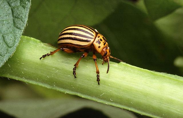 Pesticide Daunatori