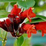 6 plante cu flori disponibile permanent