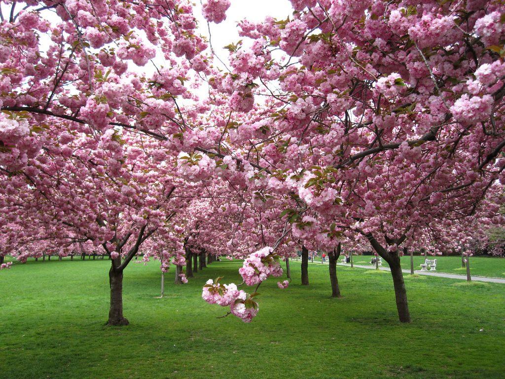arbori decorativi prin flori