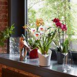 Lechuza Orchidea – Noile ghivece inteligente de la CityGarden