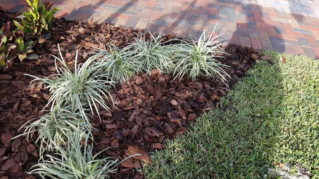 Scoarță de pin pentru grădină