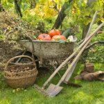 Lucrări de grădină în octombrie