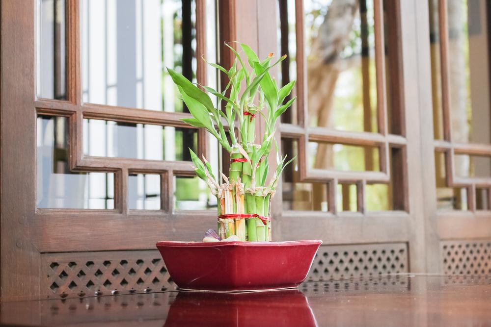Bambusul în ghiveci