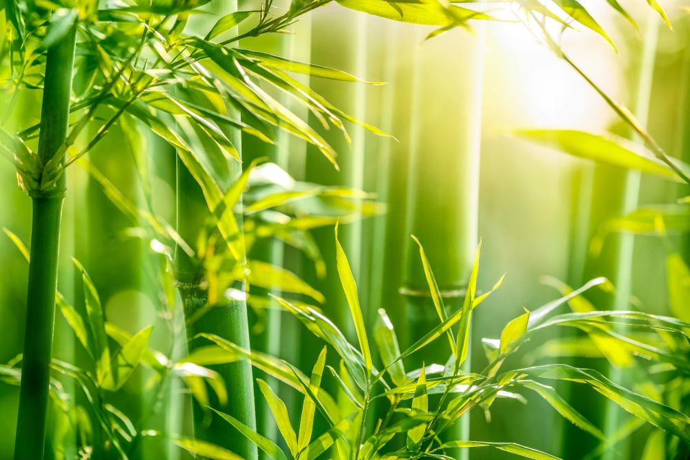 Bambusul -  Frumusețe și rezistență