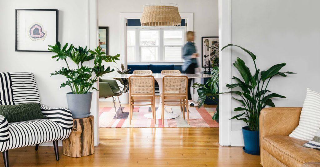 Cum alegi plante de sufragerie