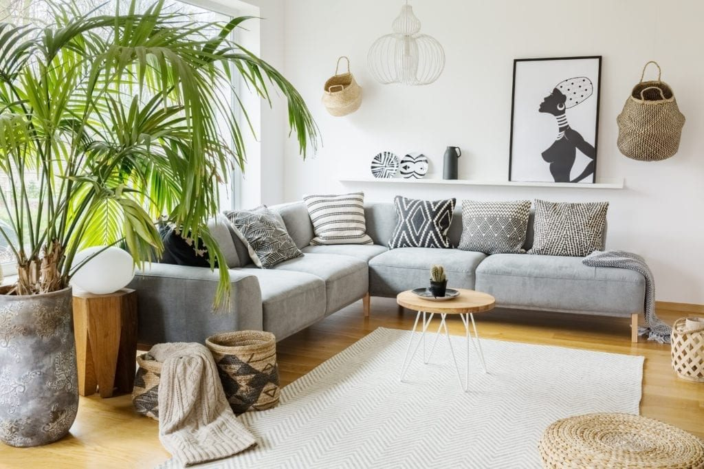 Plante sufragerie