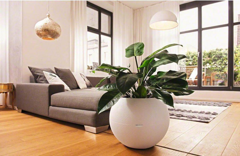 lechuza cu plante de sufragerie
