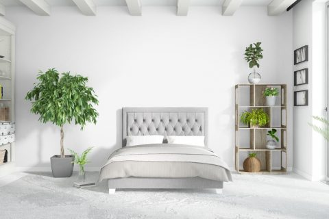 Care sunt plantele recomandate în dormitor?