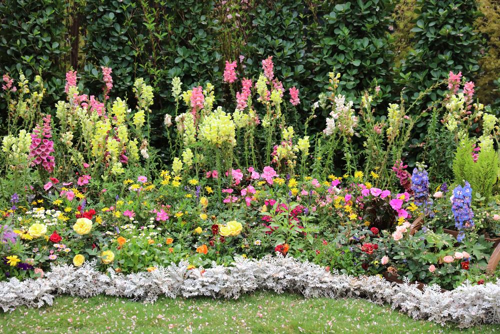Plante perene colorate