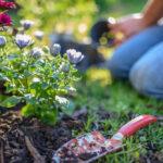De ce să alegi plante perene pentru grădina ta