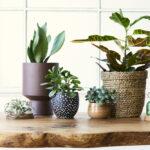 Importanta ghivecelor in dezvoltarea sanatoasa a plantelor